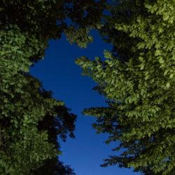 Błądzę wśród drzew,