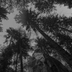 Błądzę wśród drzew